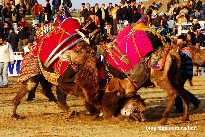 印度骆驼节9日精彩之旅